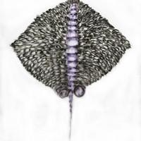 grande métamorphose, pastenague 2, pastel sur calque, 100 x 116, 2012